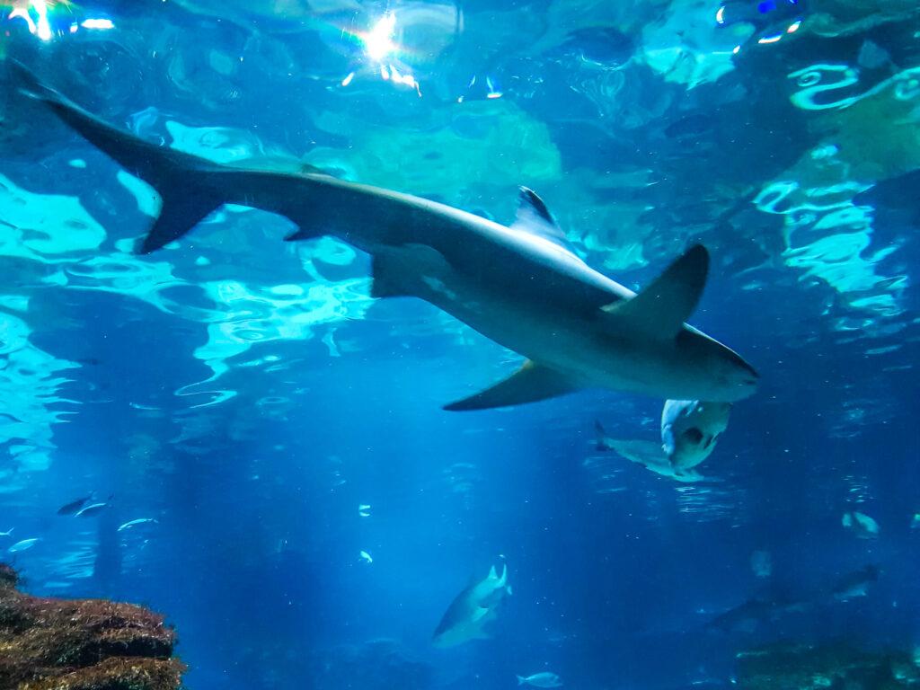 巴塞隆納水族館 西班牙