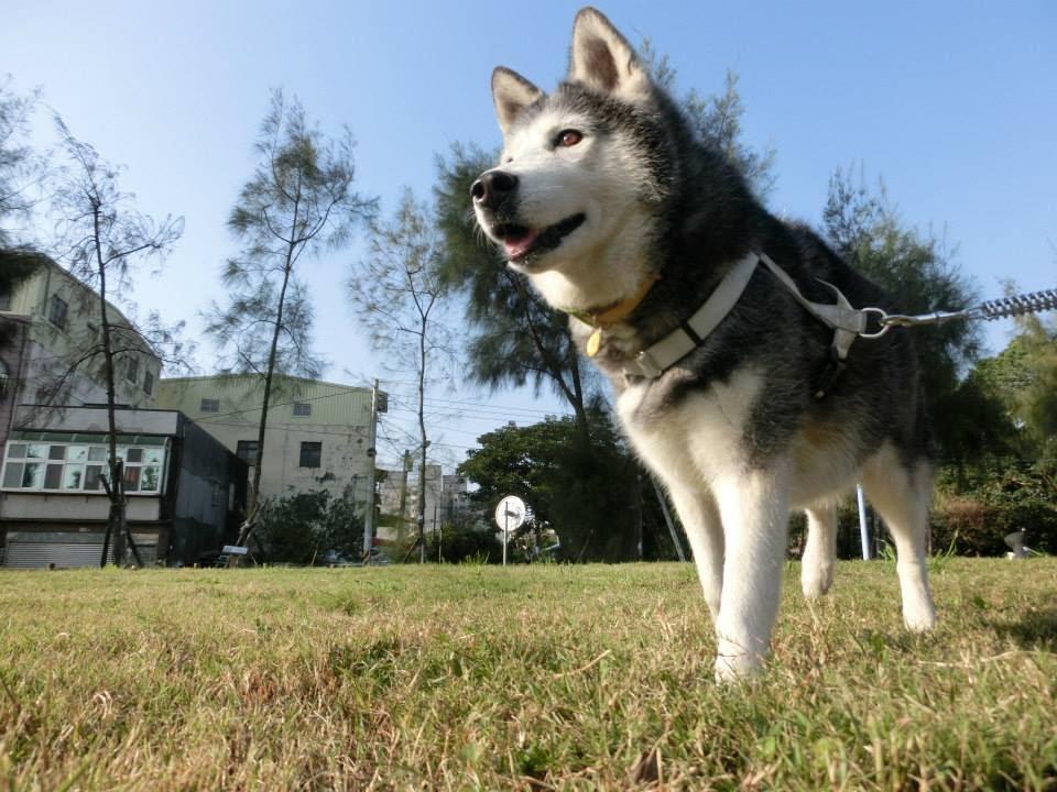 領養代替購買 認養狗