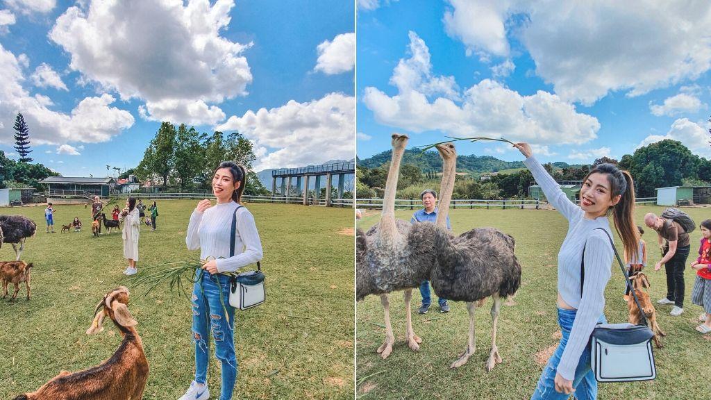 台東原生植物園 餵一下鴕鳥