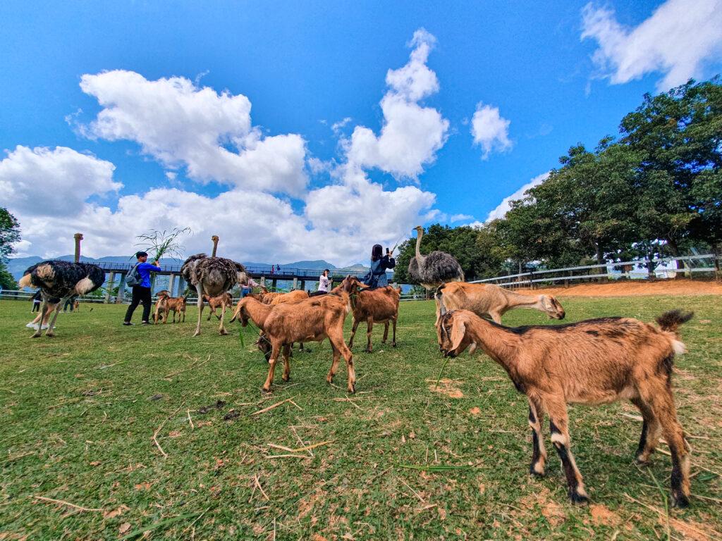 親子牧場可以很靠近這些動物