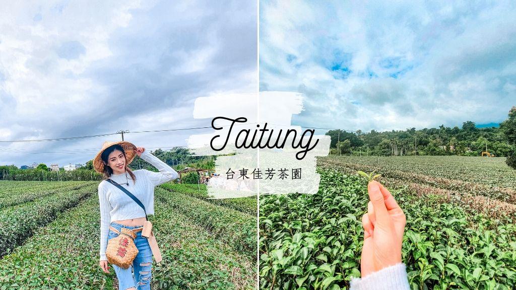 佳芳茶園 台東特色景點 體驗自己採茶 製作手工茶香蛋捲